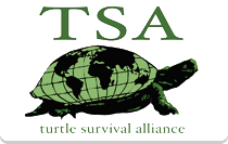 Turtle Survival Alliance